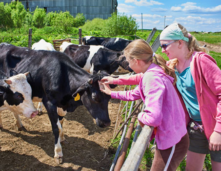 on the farm learn english in Ireland